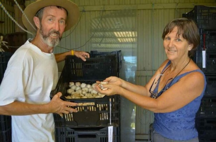HOW IT'S DONE: stephen_kerrianne_mcnamara1 with some of their seed garlic from last year's crop. Pictures by MARK GALLAGHER