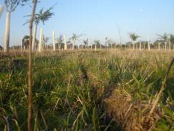 Pa Yeomans Slow Fast Soil