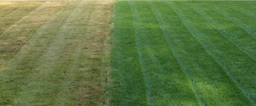 before and after lawn treatment - Lawn Treatment