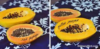 Difference between Papaya and Papaw? | Slow Fast Soil