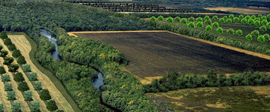 agroforestry-landscape